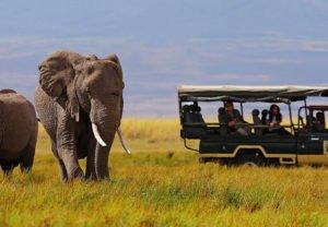 elephant-image-from-safari