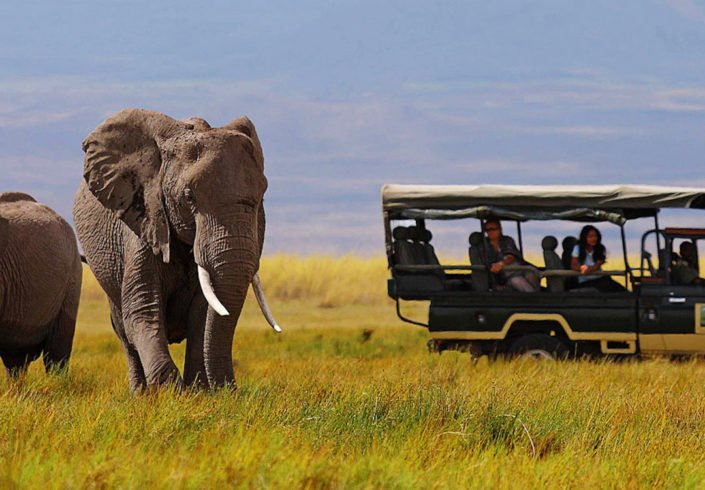 elephant-image-from-safari