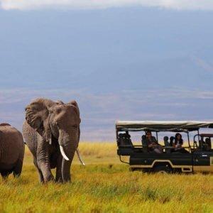 a safari in south africa