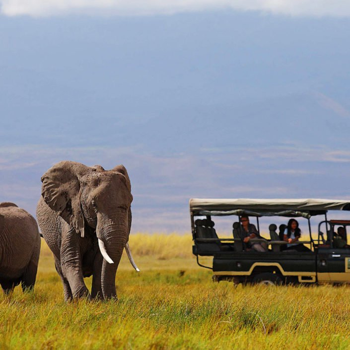 a safari in south africa