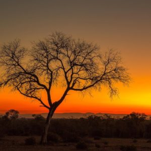 Amazing African Sunset silhouette
