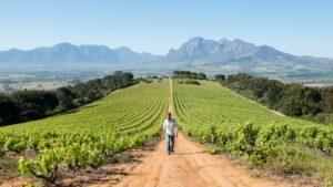 Fairview Vineyards