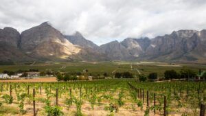Meerlust winery Cape winelands