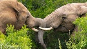 South Africa safari 2020