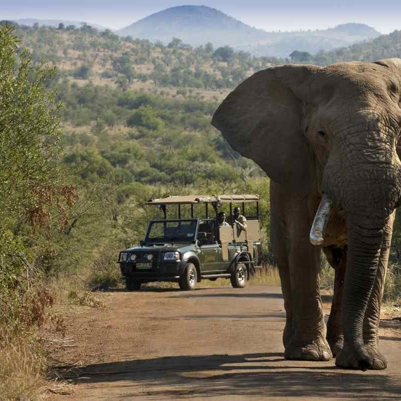 elephant crossing the road at addo elephant national park
