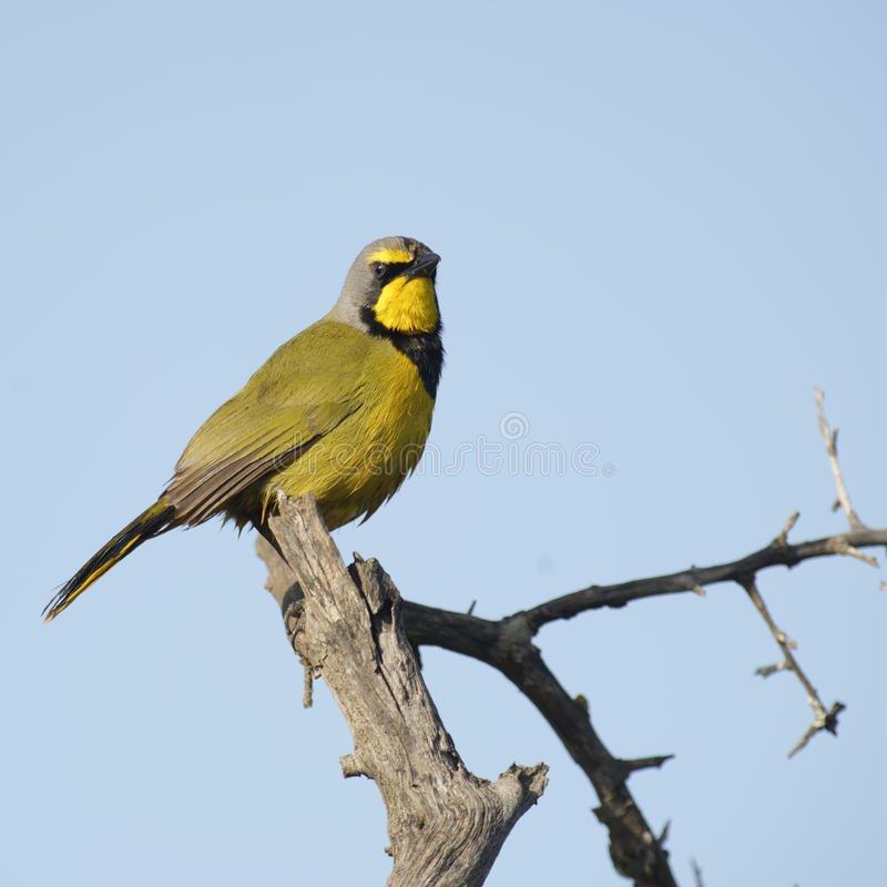 birdlife addo national park