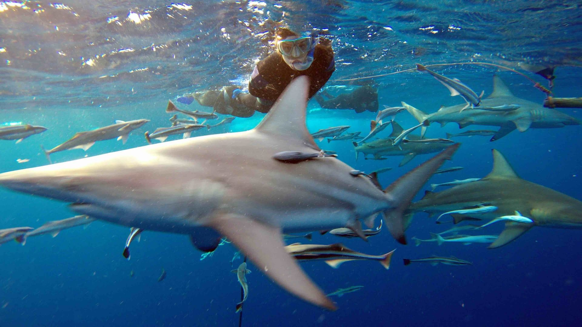 Aliwal Shoal Shark Cage Diving