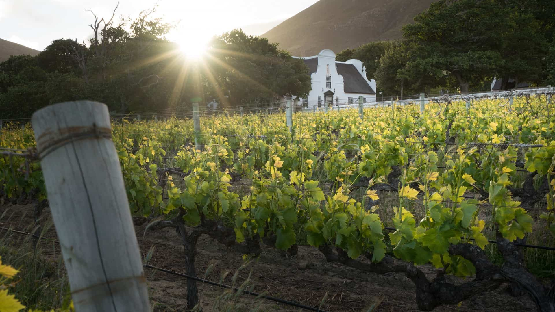 groot constantia wine farm