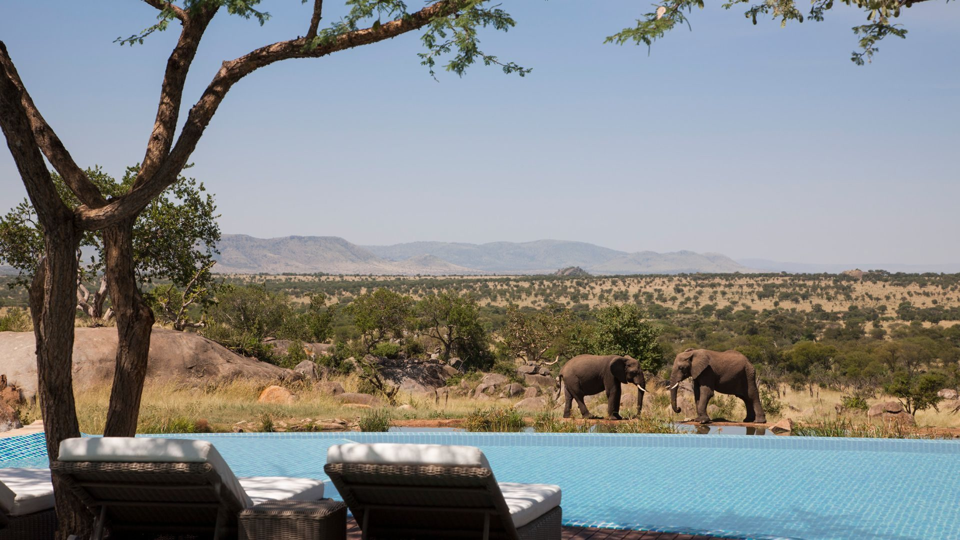 the best african family safaris